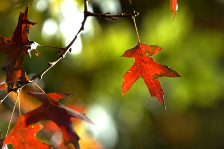 Casey Campbell Photo, Leaves 2