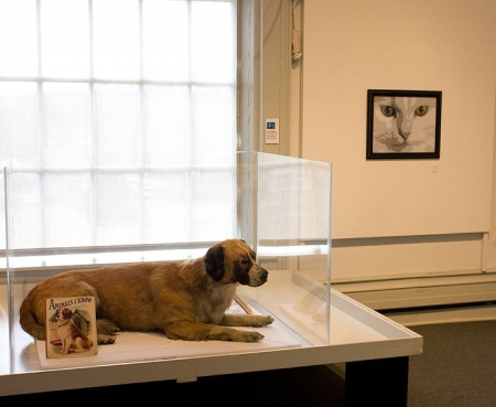 Display Case Dog